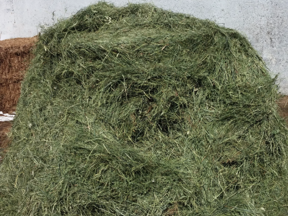 haydryers.com, AgriCompact Technologies GmbH, hay, forage, feed, milk, cheese, cheesemakers